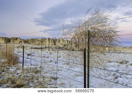 calm winter dusk over prairie in northern Colorado with with a cattle fence and tumbleweed