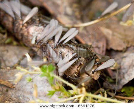 Swarming Subterranean Termites