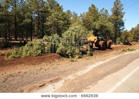 Skidder Drags A Tree