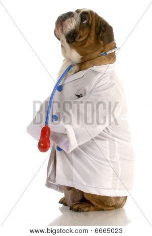 Bulldog Doctor