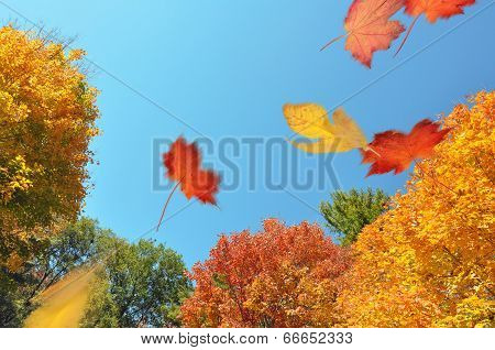 Leaves blowing through an autumn forest