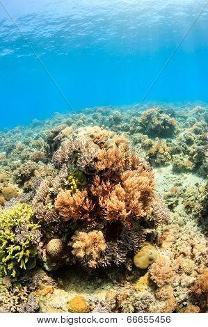 Sunbeams on coral