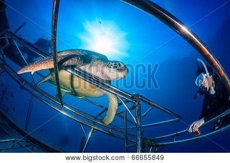 SCUBA Diver Next to a Turtle