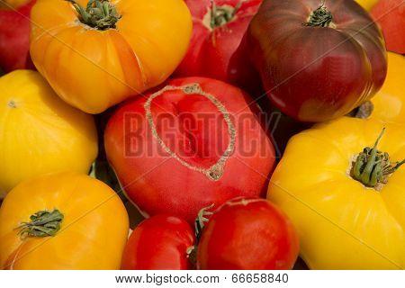 Farm Garden Fresh Healthy Nutritious Organic Heirloom Tomatoes