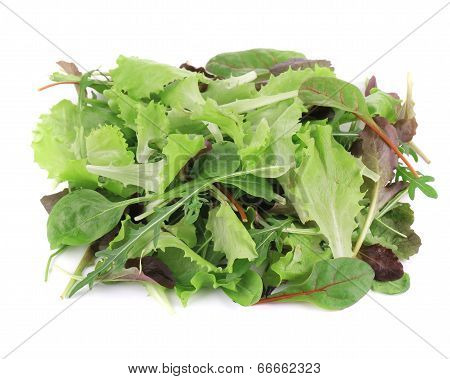 Green and Red Leaf Lettuce.
