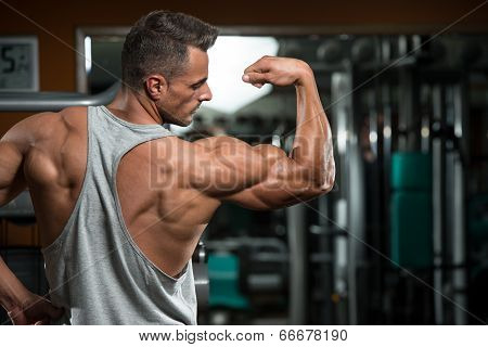 Perfect Biceps