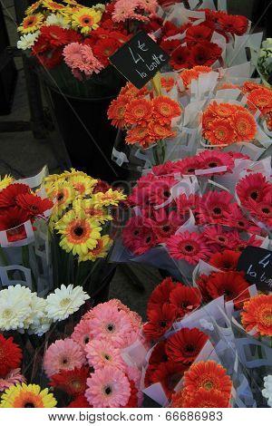 Gerberas At A Flower Market