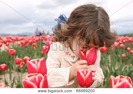 Smelling The Tulips