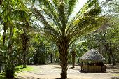 stock photo of papagayo  - Road to the Pacific ocean through a park with palms in the Golfo de Papagayo - JPG