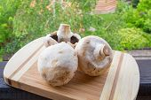 stock photo of agaricus  - Champignons  - JPG