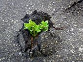 pic of unbelievable  - outdoors photography of small sprout making the way through firm asphalt - JPG