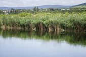 stock photo of humidity  - Humid biotope in natural reserve reeds and water - JPG
