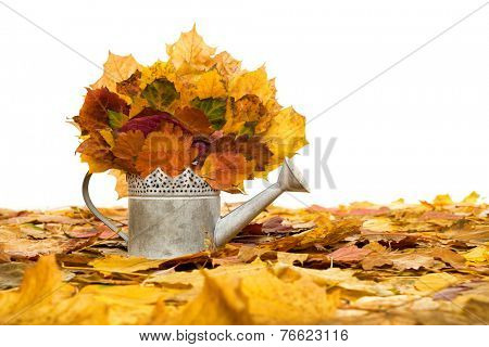 bailer with autumn leaves isolated on white