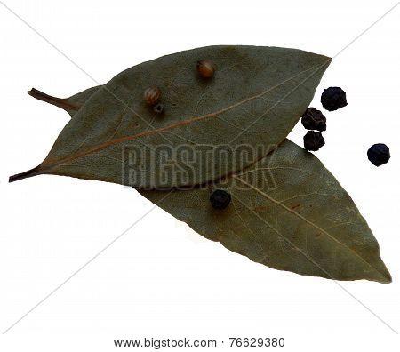 bay leaf, black pepper, coriander seeds