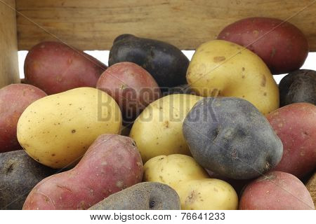 yellow, red and purple potatoes in a wooden crate