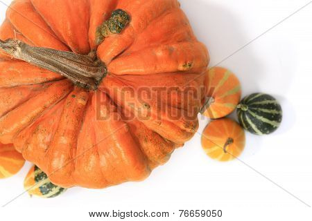 Closeup of Pumkins isolated