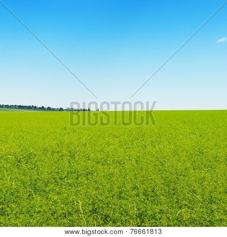Green Field And Blue Cloudless Sky