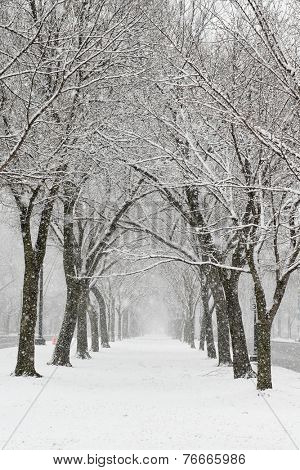 Snow covered trees and alley - Washington DC, United States
