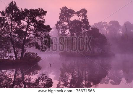 Trees On Lake Surface At Sunrise