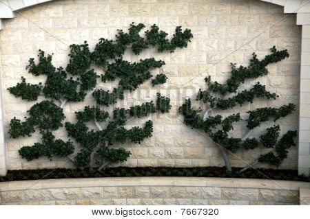 Shrubbery on the Walls of The Bahi Garden