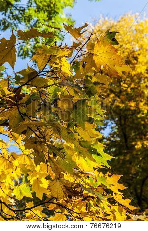 Yellow and Orange Leaves, Autumn in Park, Warsaw, Poland