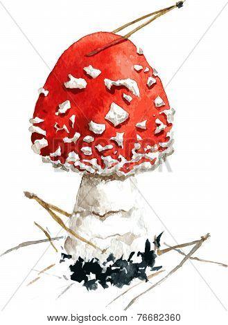 amanita,poisonous mushroom