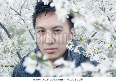 Face of a watchful young Asian man peering through a gap in tree branches covered in dense white cherry blossom as he observes the camera with a serious expression
