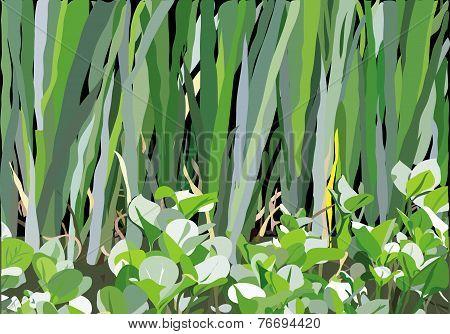 Marsh Pattern
