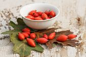 pic of wild-brier  - red rose hips and bowl with oak leaves on grunge wooden table