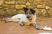 foto of mongrel dog  - Happy mongrel dog resting in a yard  - JPG