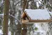 pic of manger  - Sparrows in a manger in a park in winter - JPG
