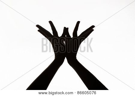 Hands of a woman showing lotus mudra