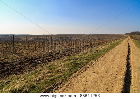 Country Road Through A Plantation Of Grape-vine