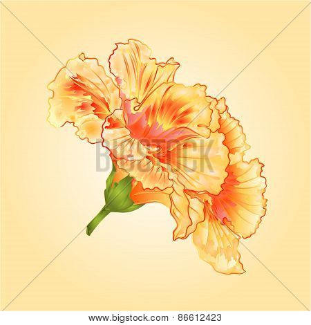 Tropical Flowers Yellow Hibiscus Vector
