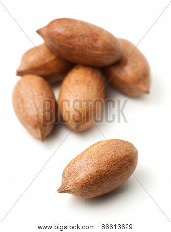 Pecans In Nutshells