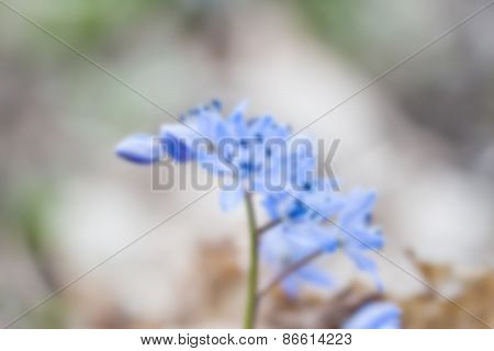 blurred blue snowdrop