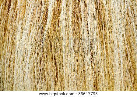 Horse Fur Tail