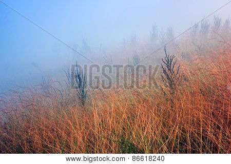 Yellow Grass In The Field Among Of Dense Fog
