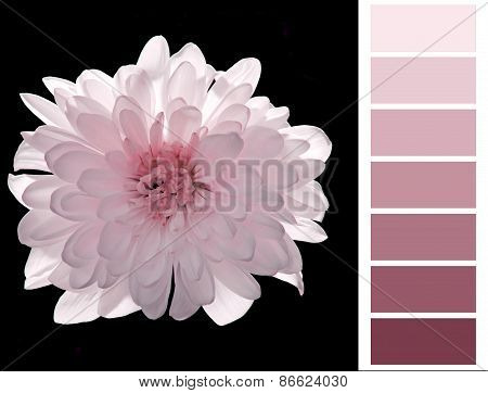 complimentay pink color card
