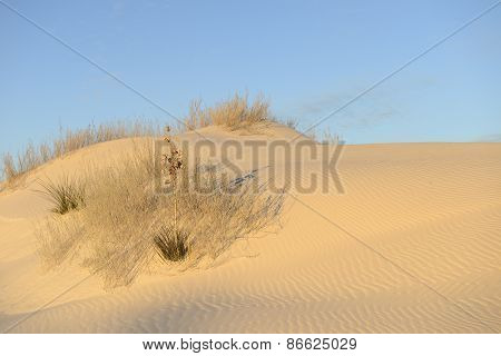 Early Morning Sun Light on Sand Dune