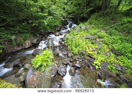 River in Caucasus mountains, near lake Ritsa, Abkhazia, Georgia