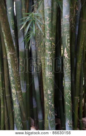 Love in Bamboo
