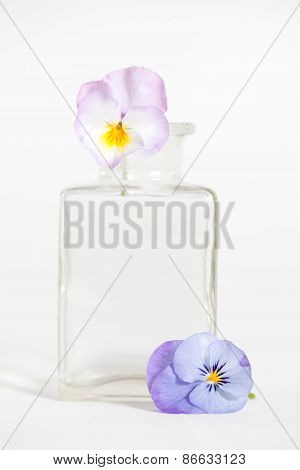 Studio Shot of Blue Colored Pansy Flower in the phial