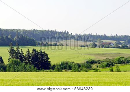View Of Fields And Forests