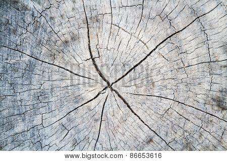 Wood Stump Texture