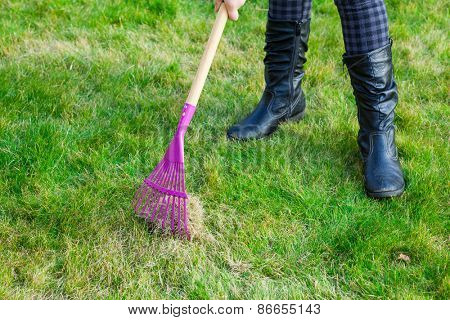 Gardening - cleaning green lawn by rake