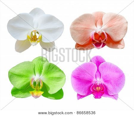 Collection of Phalaenopsis orchid flower isolated on white bakcground, clipping path.