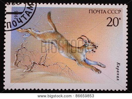 Moscow, Ussr- Circa 1985: Postage Stamp Printed Mail Ussr Shows Image Of A Wild Animal Caracal