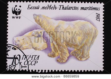 Moscow, Ussr-circa1987: Postage Stamp Printed Mail Ussr Shows Image Of A Polar-bear With Cubs