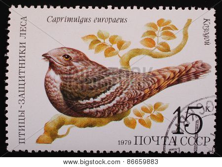 Moscow, Ussr- Circa 1979: Postage Stamp Printed Mail Ussr Shows Image Of A Bird Nightjar Protector O